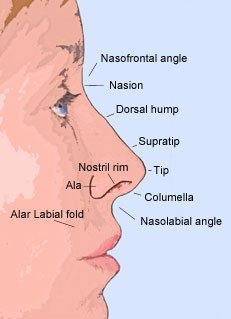 Nose Anatomy