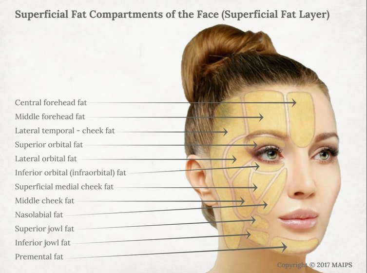 superficial fat pads
